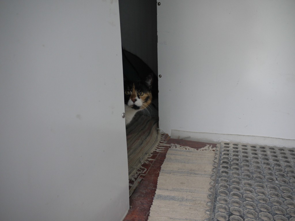 Marley peeks around the corner